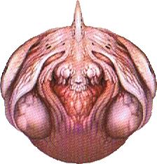 File:Master flesh 1.png