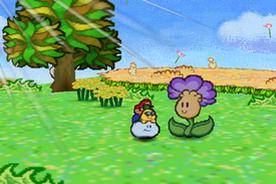 Flower-fields flower