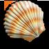 Shell large