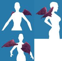 Wings Cherub