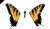 File:Butterflyparamorecursor-1.png