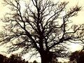 Thumbnail for version as of 18:45, September 26, 2012