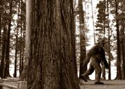 Bigfootcoverx2