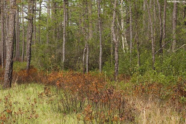 File:Greenswamp.jpg