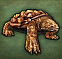 File:Macrochlemys icon.png