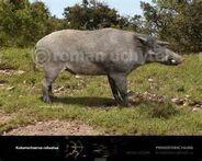 Kubanochoerus