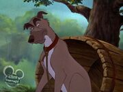 Chief (The Fox and the Hound)