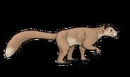 Kopidodon