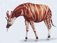 Giraffokeryx