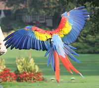 File:200px-Ara macao -flying away-8a.jpg