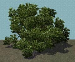 TreeShrub
