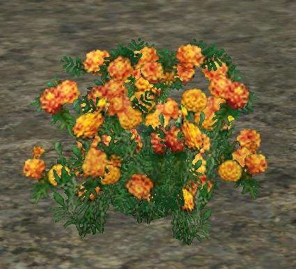 File:Marigolds.jpg