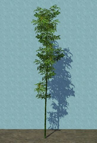 File:Bamboo.jpg
