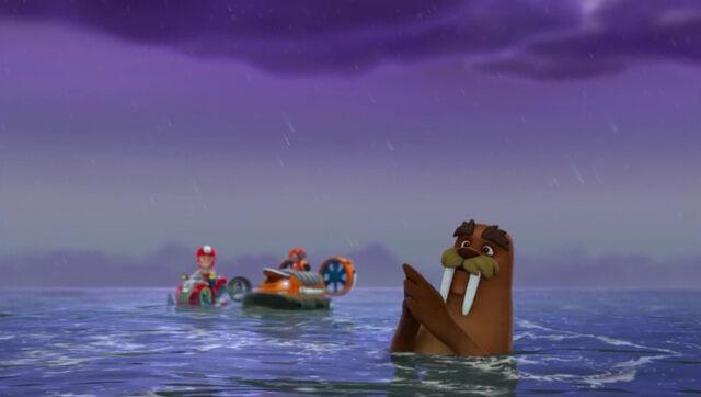 File:PAW Patrol - Wally the Walrus - Boogie 5.jpg
