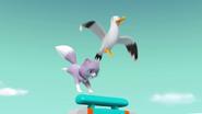 Seagull stowaway 4