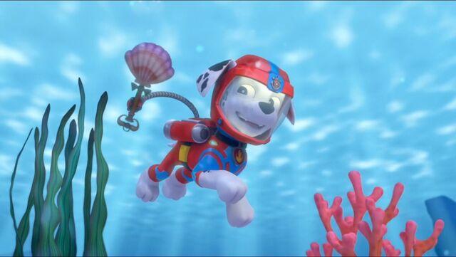 File:Baby Octopus 67.jpg
