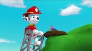 PAW Patrol Pups Save the Songbirds Scene 52