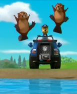Beaver 14