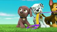 PAW Patrol Pups Save a Goldrush Scene 3