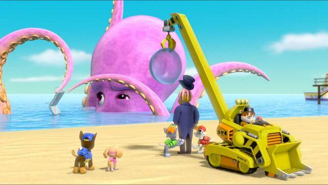 File:Baby Octopus 96.jpg