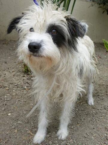 File:Terriermix-small.jpg