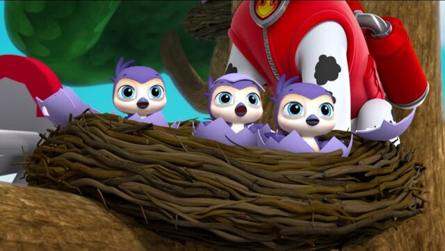 File:PAW Patrol Pups Save the Songbirds Scene 46.jpg