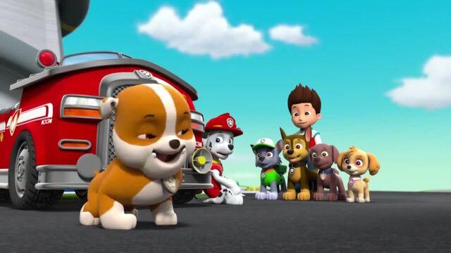 File:PAW Patrol Season 2 Episode 10 Pups Save a Talent Show - Pups Save the Corn Roast 224257.jpg