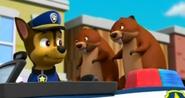 Beaver 13