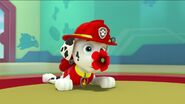 PAW Patrol Pups Save the Songbirds Scene 12
