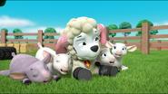 Sheep 32