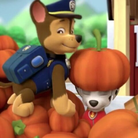 Plik:Chase and Marshall in the pumpkins.jpg