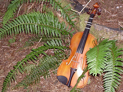 File:Fiddlefern.jpg