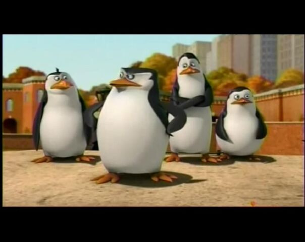 File:Whats-private-staring-at-penguins-of-madagascar-20586606-1272-1010.jpg