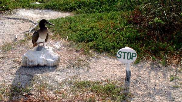 File:Gl stop sign.jpg