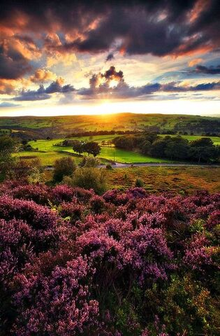 File:Sunset on Norland Moor.jpg