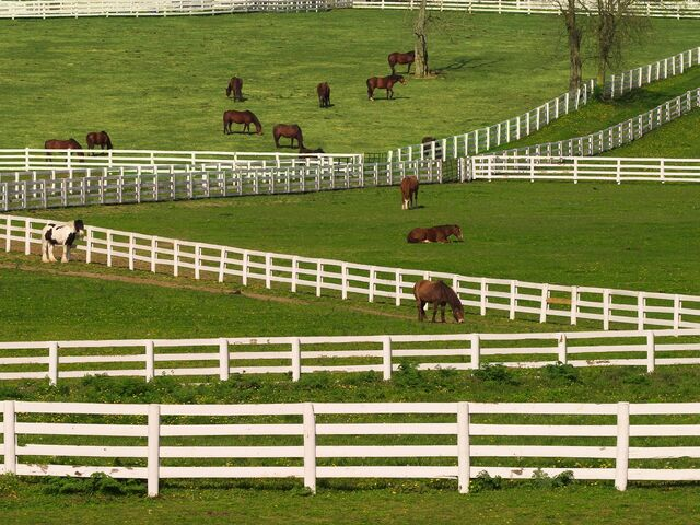 File:Thoroughbred-Horses-Lexington-Kentucky.jpg