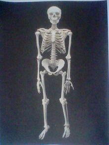 Sims Skeletons