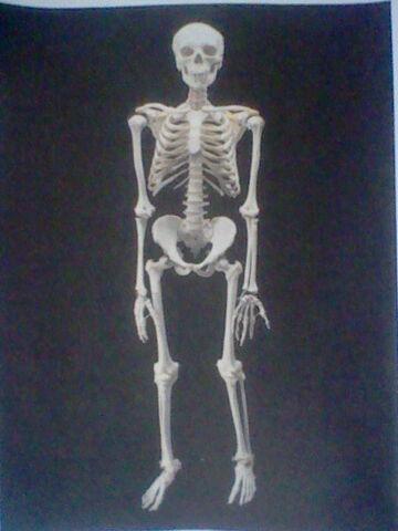File:Sims Skeletons.JPG