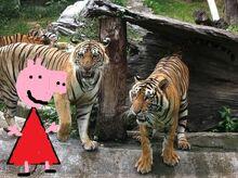 Peppa zoo