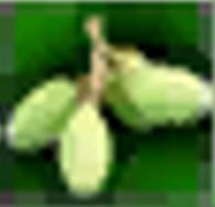 Fruit of Woodspirit