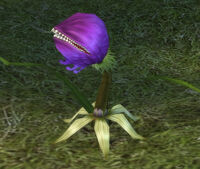 OgreBlossom