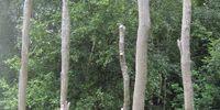 Tree bog
