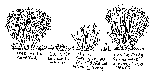 File:Coppice1.png