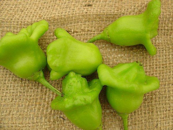 File:Aji-pepper.jpg