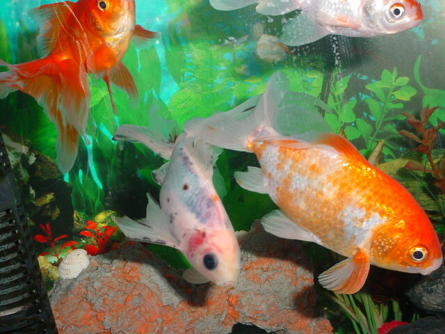File:Fish1.JPG