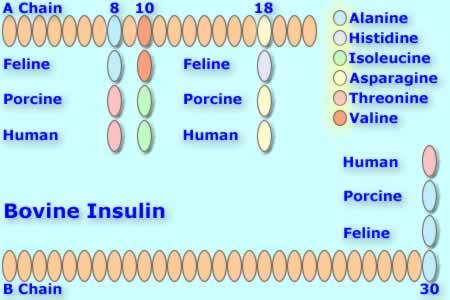 File:Bovineinsulin.jpg