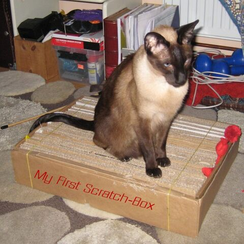 File:Scratchbox1.jpg
