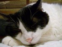 File:Buster Girl Sleeping-1-.jpg