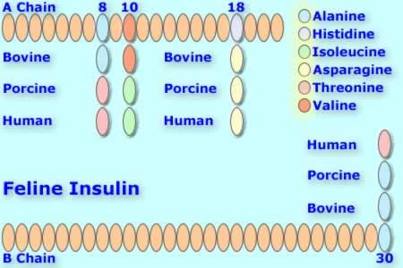 File:Felineinsulin.jpg