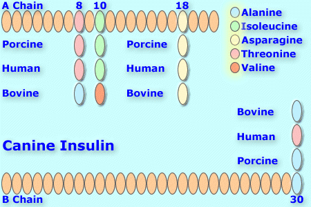 File:Canineinsulin8.png